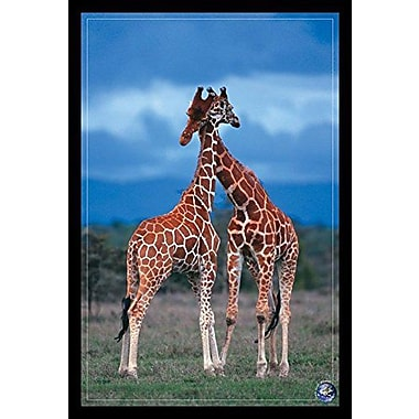 Bloomsbury Market 'Giraffes High Love Save Our Planet' Framed Photographic Print
