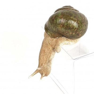 August Grove Connor Polyresin Snail Figurine