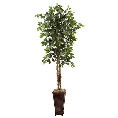 Darby Home Co Ficus Tree in Planter