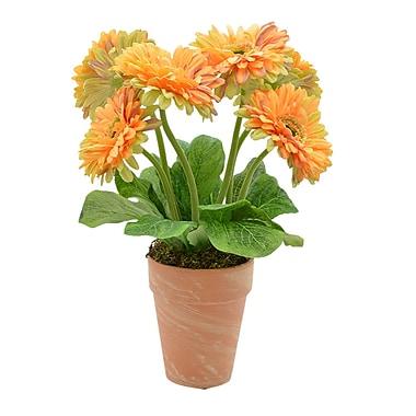 August Grove Gerbera Daisy Flowers in Pot; Yellow