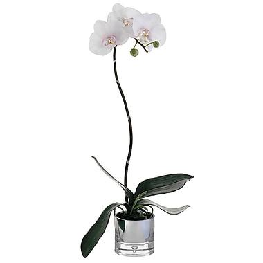 Alcott Hill Phalaenopsis Bush Faux Orchid Flower in Glass Plant