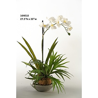 Bay Isle Home Mini Staghorn Fern w/ Vanda Orchid in Ceramic Planter