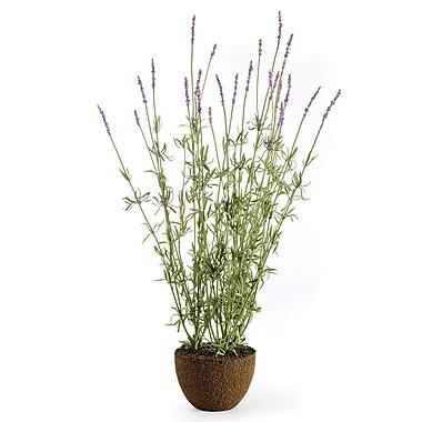 One Allium Way Small Lavender Flower
