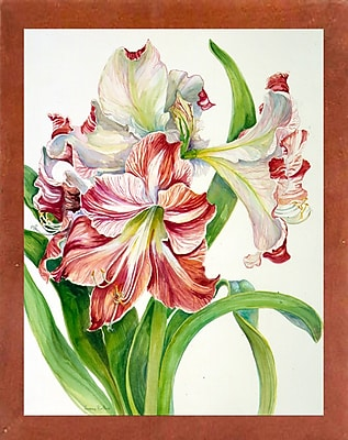 Winston Porter 'Red And White Amaryllis' Print; Canadian Walnut Wood Medium Framed Paper