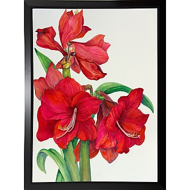 August Grove 'Amaryllis Standing Tall' Print; Black Plastic Framed Paper
