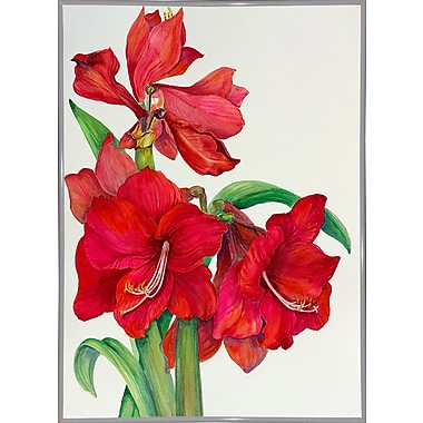 August Grove 'Amaryllis Standing Tall' Print; White Metal Framed