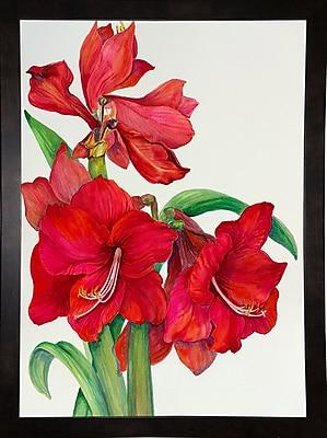 August Grove 'Amaryllis Standing Tall' Print; Black Wood Medium Framed Paper
