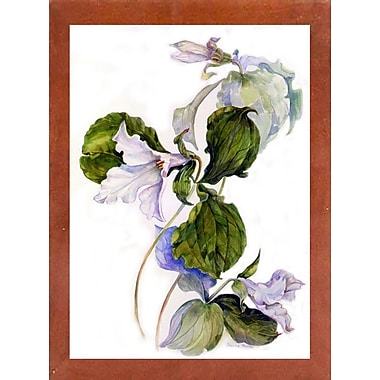 Charlton Home 'White Trillium' Print; Canadian Walnut Wood Medium Framed Paper