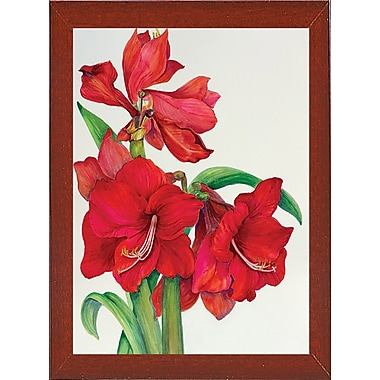 August Grove 'Amaryllis Standing Tall' Print; Red Mahogany Wood Medium Framed Paper