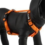 Alcott Essentials Adventure Visibility Harness, Neon Orange