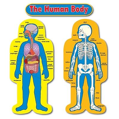 Carson Dellosa® Bulletin Board Set, Child-Size Human Body