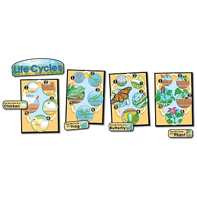 Life Cycles Bulletin Board Set