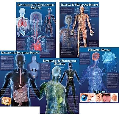 Carson-Dellosa Bulletin Board Sets, Human Body Facts