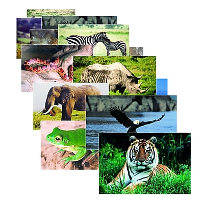 Stages Learning Posters, Wild Animal