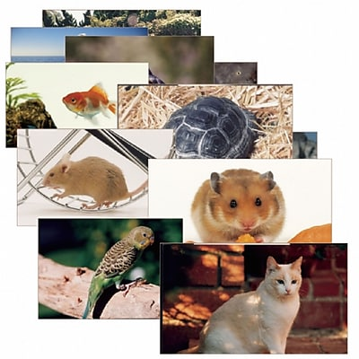Stages Learning Materials® Pets Poster Set (SLM155)