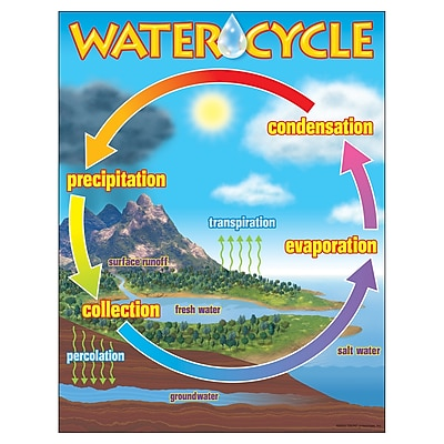 Trend® Learning Charts, The Water Cycle