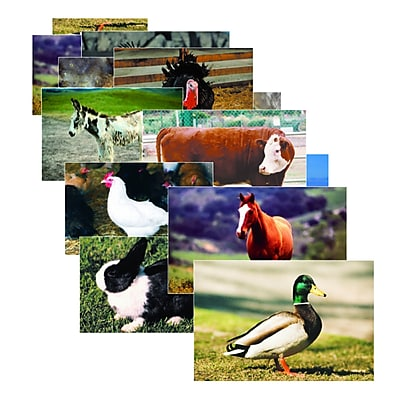 Stages Learning Materials® Real Life Learning - Farm Animal Poster Set, Science (SLM152)