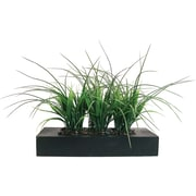 "Laura Ashley® 11"" Green Grass in Contemporary Wood Planter"