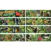 Mark Twain Tropical Rain Forest Bulletin Board Set