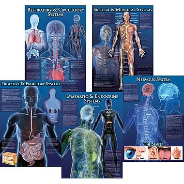 Mark Twain Human Body Facts Bulletin Board Set