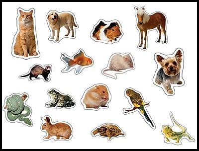 Carson-Dellosa Pets Photographic Shape Stickers
