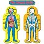 Carson-Dellosa Child-Size Human Body Bulletin Board Set