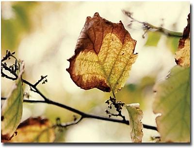 "Trademark Global Ariane Moshayedi ""Leaves"" Canvas Art, 16"" x 24"""
