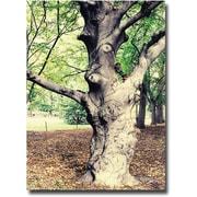 "Trademark Global Ariane Moshayedi ""Tree"" Canvas Arts"