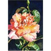 "Trademark Global David Lloyd Glover ""Royal Rose"" Canvas Art, 16"" x 24"""