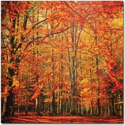 "Trademark Global Philippe Sainte Laudy ""Red November"" Canvas Art, 35"" x 35"""