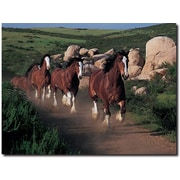 "Trademark Global ""Clydesdales Running Free"" Canvas Art, 18"" x 24"""