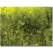 "Trademark Global Beata Czyzowska Young  ""Symphony in Green"" Canvas Art, 30"" x 47"""