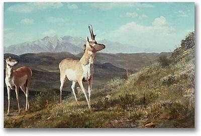 "Trademark Global Albert Biersdant ""Antelope"" Canvas Art, 16"" x 24"""