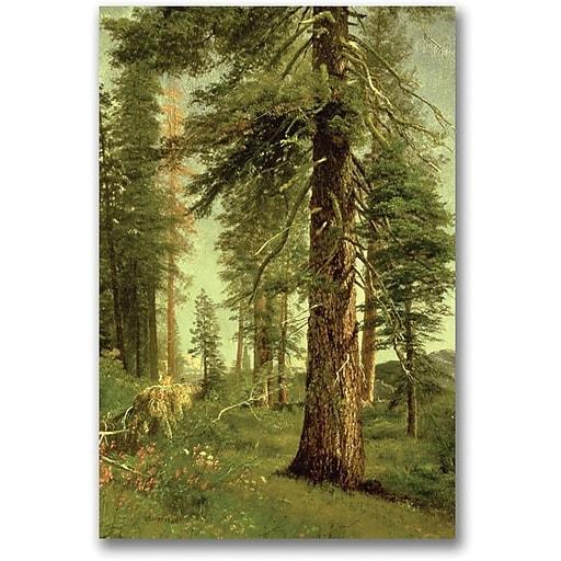 "Trademark Global Albert Biersdant ""California Redwoods"" Canvas Art, 24"" x 16"""