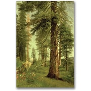 "Trademark Global Albert Biersdant ""California Redwoods"" Canvas Art, 47"" x 30"""