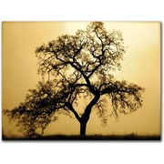 """Trademark Global Colleen Proppe """"Pacific Oak"""" Canvas Art, 14"""" x 19"""""""