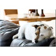 "Trademark Global ""Jack Russel II"" Canvas Art, 16"" x 24"""