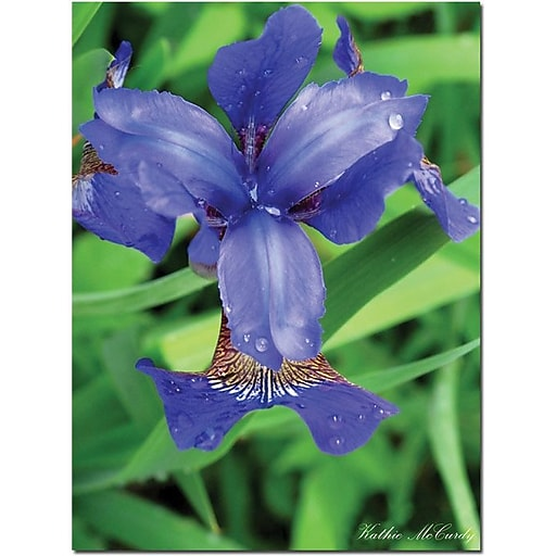 "Trademark Global Kathie McCurdy ""Siberian Iris"" Canvas Art, 47"" x 35"""