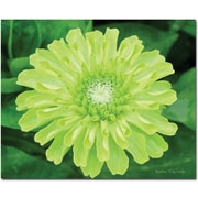 "Trademark Global Kathie McCurdy ""Green Envy Zinnia"" Canvas Art, 26"" x 32"""