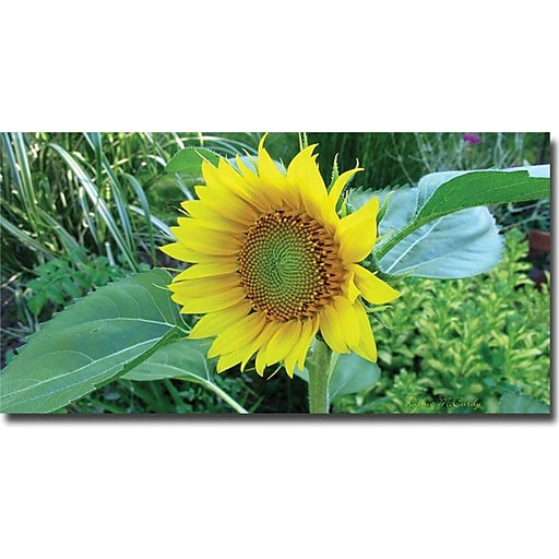 "Trademark Global Kathie McCurdy ""Sunflower"" Canvas Art, 24"" x 47"""