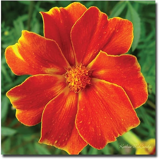 "Trademark Global Kathie McCurdy ""Marigold"" Canvas Art, 24"" x 24"""