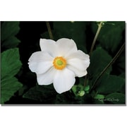 "Trademark Global Kathie McCurdy ""Big White Flower"" Canvas Art, 16"" x 24"""