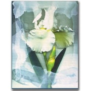 "Trademark Global Kathie McCurdy ""Sheer White Iris"" Canvas Art, 47"" x 35"""