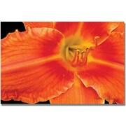 "Trademark Global Kathie McCurdy ""Orange Day Lily"" Canvas Art, 18"" x 24"""