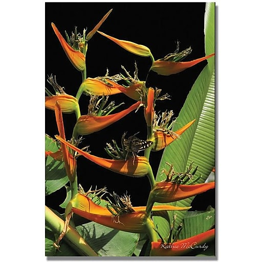 "Trademark Global Kathie McCurdy ""Tropical Paradise"" Canvas Art, 47"" x 30"""