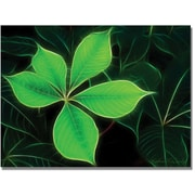 "Trademark Global Kathie McCurdy ""Big Green Leaf"" Canvas Art, 30"" x 47"""