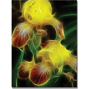 "Trademark Global Kathie McCurdy ""Yellow Iris"" Canvas Art, 24"" x 18"""