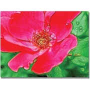 "Trademark Global Kathie McCurdy ""Red Rose"" Canvas Art, 35"" x 47"""