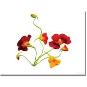 "Trademark Global Kathie McCurdy ""Orange and Yellow Nasturtiums"" Canvas Art, 18"" x 24"""