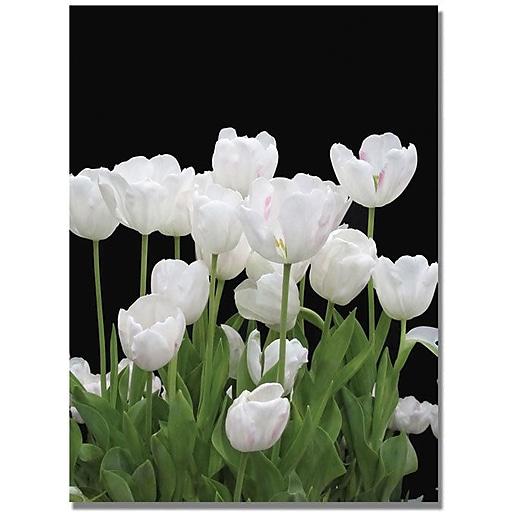 "Trademark Global Kathie McCurdy ""White Tulips"" Canvas Art, Medium, 47"" x 35"" (KM0236-C3547GG)"